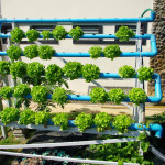 An Introduction to Hydroponics