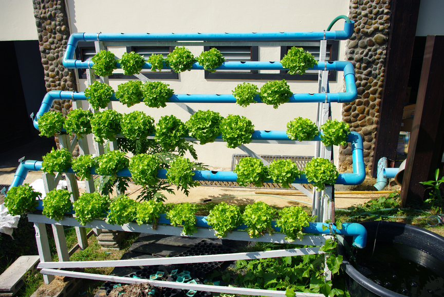 An Introduction to Hydroponics Doomsday News Doomsday News