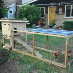 Raising Chickens At Home – The Quick n' Dirty Guide