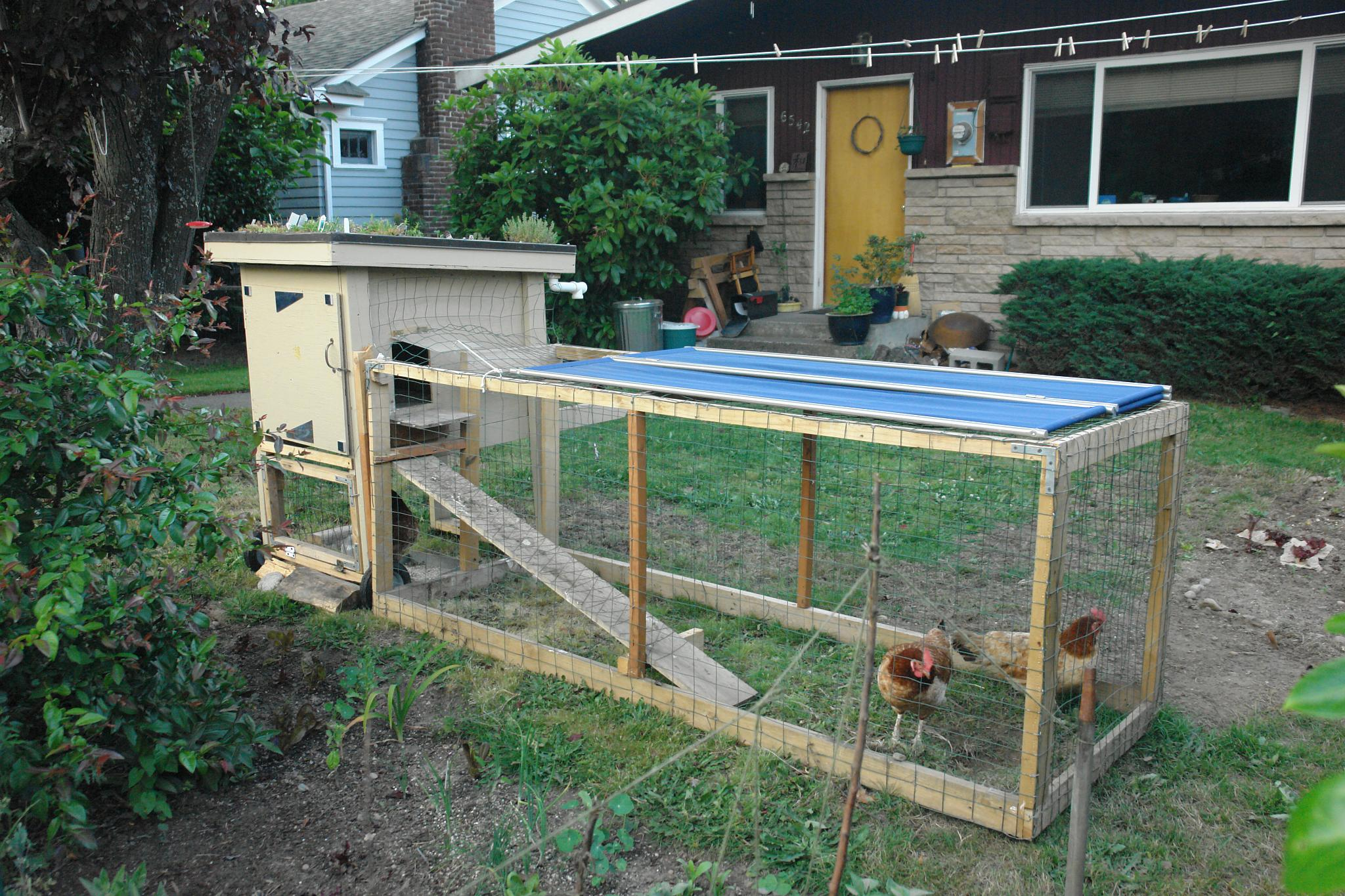 raising chickens at home the quick n 39 dirty guide doomsday news
