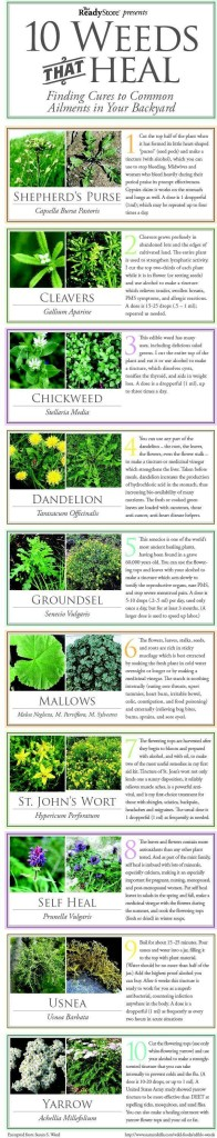 10-Weeds-That-Heal