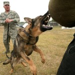 Four Legged Security: Tips for Adding the Right Canine to Your Survival Cache